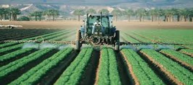 Prohibición de pesticidas en UE para agricultura extensiva por demostrarse que causan cáncer