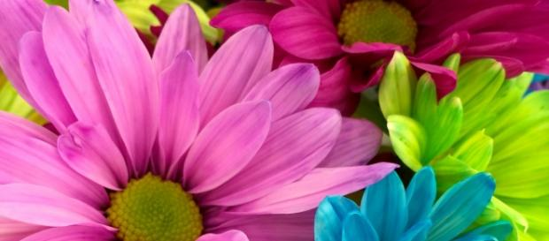 flower images courtesy of pexels.com