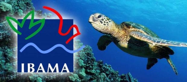 O Ibama oferecerá concurso público para 2016