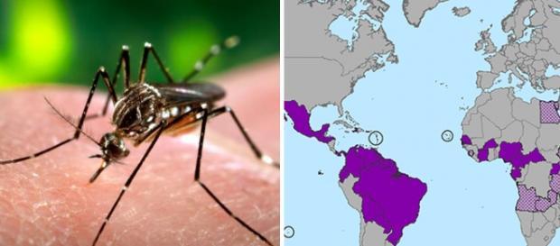 Virusul Zika- zonele cele mai afectate de pe Glob