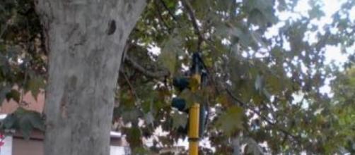 Roma: semaforo coperto da rami di un albero