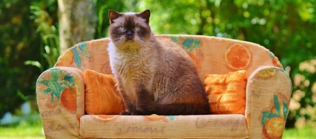 """O gato conhecido como """"O pequeno"""" entrou dentro do sofá sem que a sua dona percebesse."""