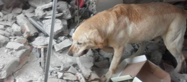Dayko, câinele erou care a salvat 7 oameni