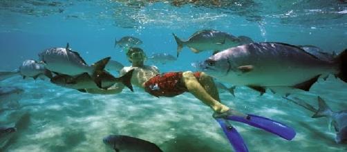 Las Galápagos ofrecen una gran diversidad por descubrir