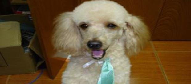 a lealdade canina também pode ser elitista?