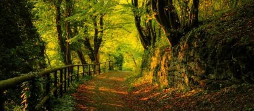 Pelo bosque, a alma atravessa o universo
