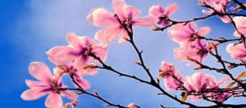 Musica: le nuove canzoni di primavera