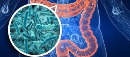 La flora batterica intestinale influenza i parametri legati al metabolismo