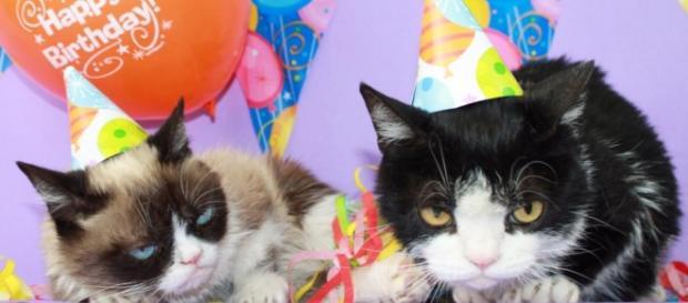 O Grumpy Cat é um dos gatos que mais fazem sucesso no Instagram, com 1.4 milhões de seguidores.