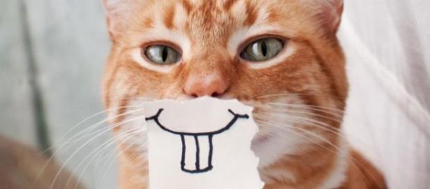 Gatos dão sinais quando amam o dono