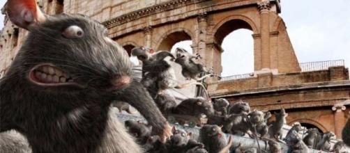 Roma, ordinanza contro emergenza topi