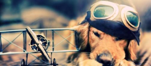 Aereo, da oggi si può portare il cane in cabina