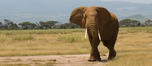 Incendio di avorio per un valore di 100 milioni in difesa degli elefanti