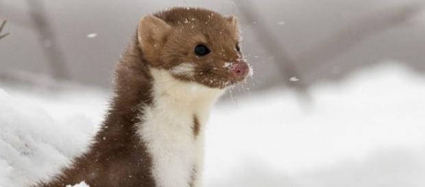 Faina al freddo, cercherà rifugio al CERN?