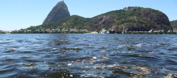 Baía de Guanabara (RJ) sofre com poluição e contaminantes