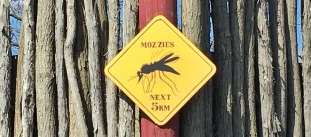 Mosquito zone / by Flickr cc, via Photopin