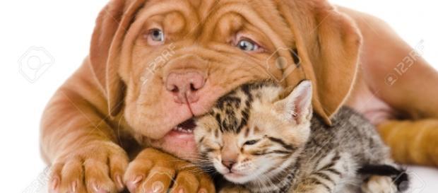 Assegno di mantenimento per animali domestici, in arrivo la proposta di legge