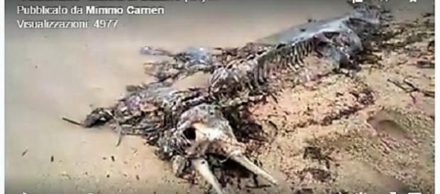 Carcassa di una creatura aliena a Taranto