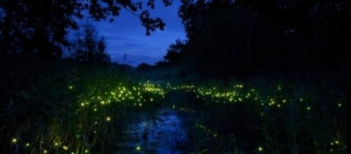 Lusiroeula, cercar lucciole insieme a una guida al Parco delle Cave di Milano