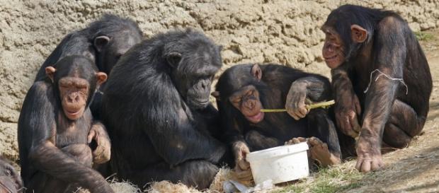 Una familia simia muy bien avenida