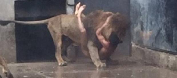 Video uomo nella gabbia dei leoni in Cile