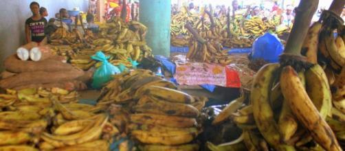 Marché de manioc et de bananes plantain à Abidjan