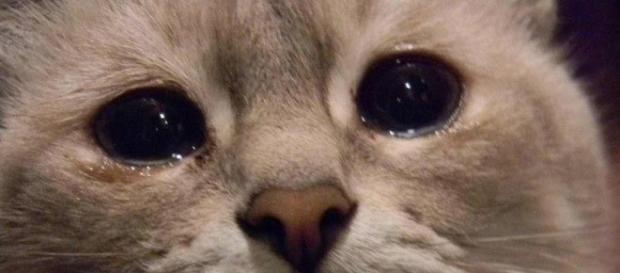 Sim, gatos também podem ter problemas psicológicos. Saiba como ajudar seu bichano.