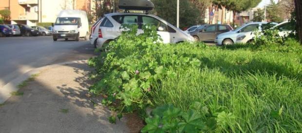 Terribile situazione del verde pubblico a Roma III Municipio