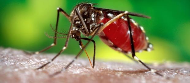 Zika Vírus é umas das preocupações na Rio 2016.
