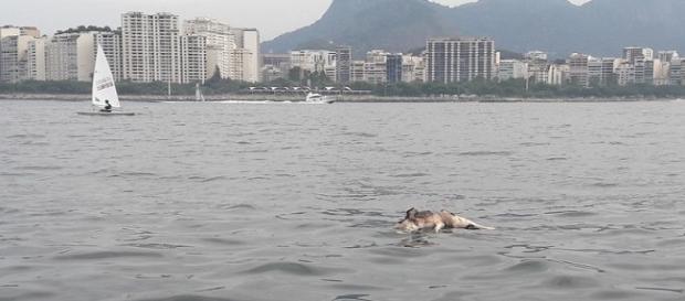Cão boiando na Baía. (Créditos: Santiago López)