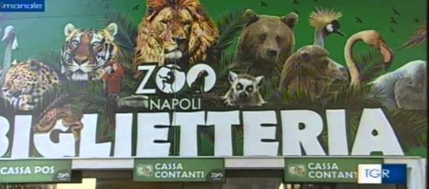 Lo Zoo di Napoli diventa a luci rosse grazie a due tartarughe vogliose.