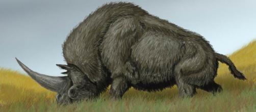 El Elasmoterio, unicornio real que pudo haber habitado junto a los primeros seres humanos.