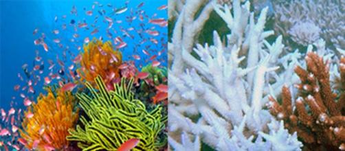 The 2 faces of the Great Barrier Reef
