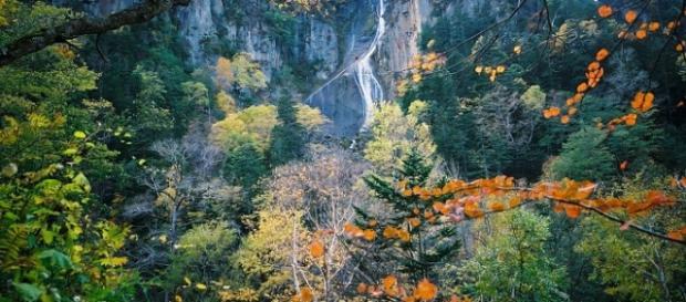 Foresta Hokkaido patria degli orsi bruni.