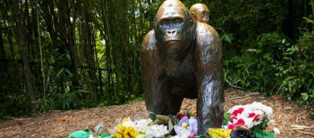 Valuri de indignare în Statele Unite după moartea gorilei Harambe
