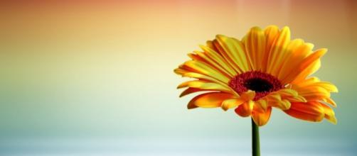 Toda a flor esteve, outrora, envolvida na escuridão