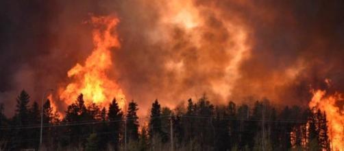 Devastazione nelle aree boschive del Canada