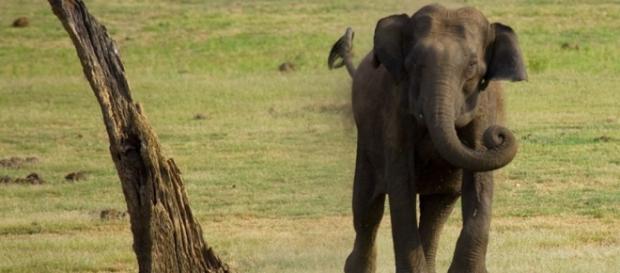 Elephant charging. Flickr cc (2.0)/via photopin