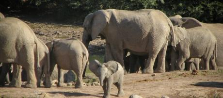 Elephants in Park, Courtesy Flickr and Efd Initiative