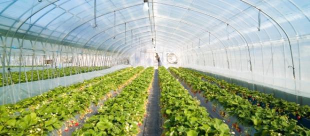 Invernadero para el cultivo de verdura