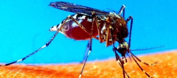 primer caso de malformaciones por Zika en España