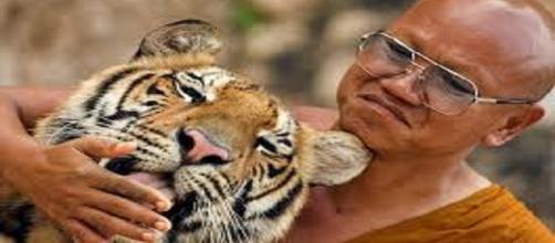 Le tigri del Tiger Temple salvate dalle denunce degli animalisti