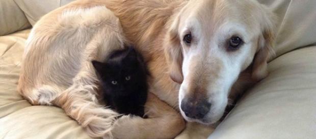 Forsberg e seu novo amiguinho gato.