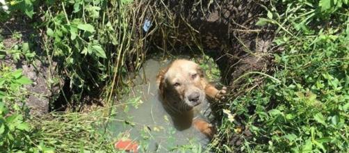 Foto retirada no local onde o cãozinho foi encontrado