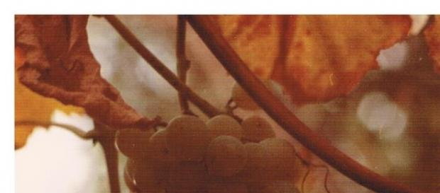La vigne et le raisin, source de vie et de plaisir... In vino, véritas ! Merci le Bordelais...