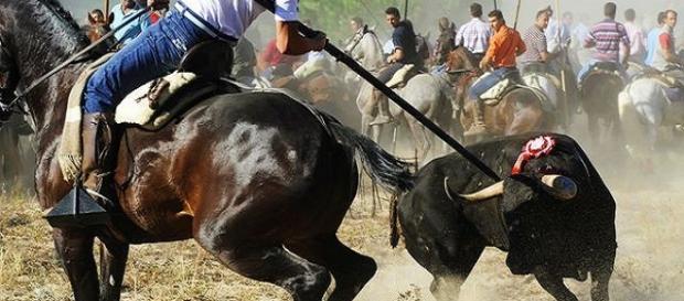 Toro de la Vega, Tordesillas (Valladolid)