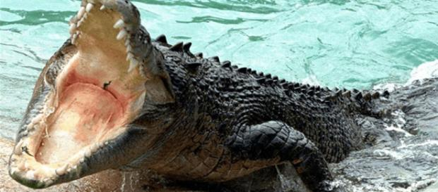 Un niño de dos años fue arrastrado por un caimán en el lago de un hotel en Disney World