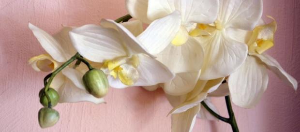L'Orchidée, ou l'éloge de la poésie florale.