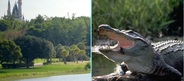 A fost găsit trupul copilului târât de către un aligator într-o lagună de la Disney World