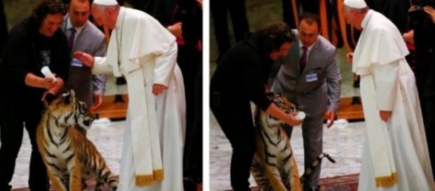 Papa é assustado por tigre no Vaticano